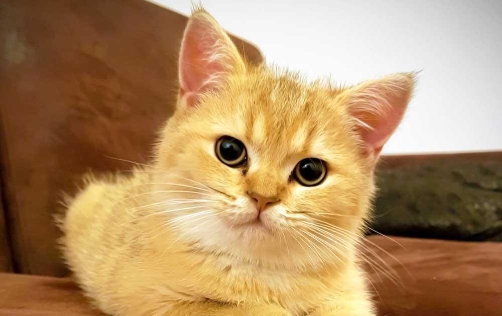 Katzenbaby als Titelfoto für Tieraufstellung